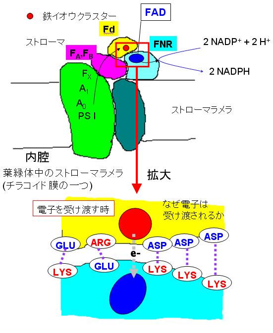 小田研究室|計算ナノ科学